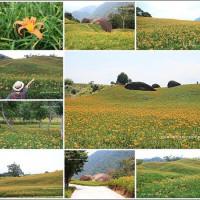 花蓮縣休閒旅遊 景點 觀光花園 赤柯山金針花海 照片