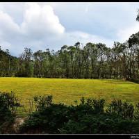 宜蘭縣休閒旅遊 景點 公園 南澳原生植物園 照片