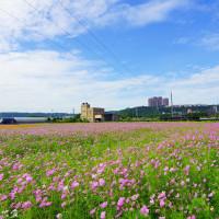 桃園市休閒旅遊 景點 景點其他 2016桃園大溪花彩節 照片