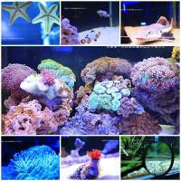 屏東縣休閒旅遊 景點 展覽館 亞太水族中心 照片