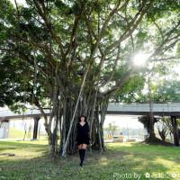 台中市休閒旅遊 景點 公園 老樹公園 照片