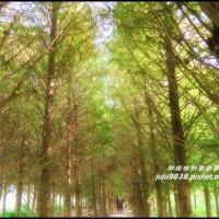 台中市休閒旅遊 景點 景點其他 霧峰落羽松祕境 照片