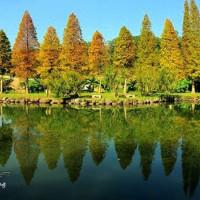新竹縣休閒旅遊 景點 景點其他 新竹北埔六塘落羽松 照片