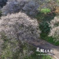 南投縣休閒旅遊 景點 觀光花園 九份二山七號梅莊 照片