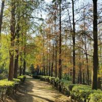 台中市休閒旅遊 景點 景點其他 泰安池杉林步道 照片