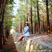 台中市休閒旅遊 景點 景點其他 社腳里社區落羽松 照片