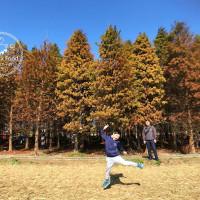 桃園市休閒旅遊 景點 觀光林園 桃園八德落羽松 照片