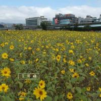 艾可婷在彩虹海濱公園 pic_id=3206556