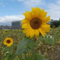 艾可婷在彩虹海濱公園 pic_id=3206557