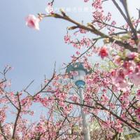 台北市休閒旅遊 景點 公園 內湖樂活公園 照片