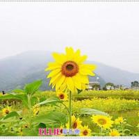 愛莉在台東關山米國學校 pic_id=3234377