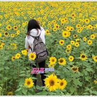 愛莉在台東關山米國學校 pic_id=3234378