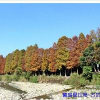 雲林縣休閒旅遊 景點 景點其他 古坑桂林村落羽松步道 照片