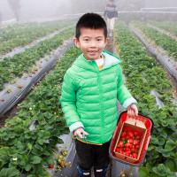 苗栗縣休閒旅遊 景點 觀光果園 秀麗農莊 照片
