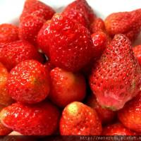 南投縣休閒旅遊 景點 觀光果園 國姓鄉草莓園 照片