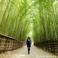 苗栗縣休閒旅遊 景點 景點其他 台阪嵐山竹林隧道 照片