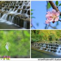 新北市休閒旅遊 景點 觀光花園 阿柔洋李子園 照片