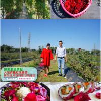 屏東縣休閒旅遊 景點 觀光農場 大花有機玫瑰農場 照片
