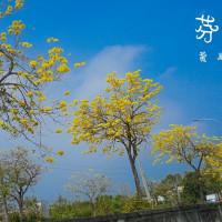 彰化縣休閒旅遊 景點 景點其他 彰化黃金大道 照片