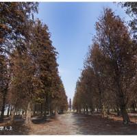 彰化縣休閒旅遊 景點 景點其他 大村落羽松 照片