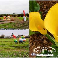 桃園市休閒旅遊 景點 觀光花園 桃園彩色海芋季、大園花彩節 照片