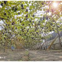 彰化縣美食 攤販 水果 老班長葡萄 照片