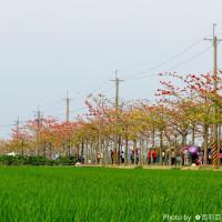 台南市休閒旅遊 景點 景點其他 白核林初埤木棉花道 照片