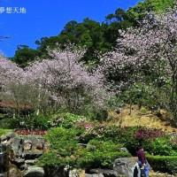 新北市休閒旅遊 景點 景點其他 三板橋 - 私人櫻花園 照片