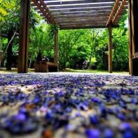 新北市休閒旅遊 景點 公園 林口樂活公園 照片