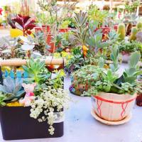 新北市休閒旅遊 購物娛樂 購物娛樂其他 台灣植物社 照片