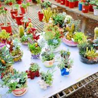 【新北-泰山區】「臺灣植物社」有仙人掌及漂亮的多肉組合盆栽