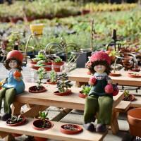 桃園市 休閒旅遊 景點 觀光花園 中興花卉農場 照片