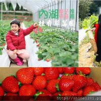 台北市休閒旅遊 景點 觀光農場 桂香草莓園 照片