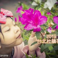 台北市休閒旅遊 景點 博物館 2019台北杜鵑花季 照片