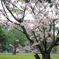 桃園市休閒旅遊 景點 公園 龍岡森林公園 照片