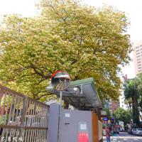 台北市休閒旅遊 景點 公園 台電加羅林魚木 照片