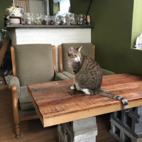 [食]永和頂溪 Mr.Chu貓咪咖啡館 無限時好慵懶好放鬆