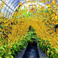 宜蘭縣休閒旅遊 景點 觀光花園 金雙甡花卉農場 照片