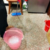 雞蛋貓在掃地王 pic_id=5312186
