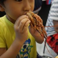 台南市美食 餐廳 火鍋 火鍋其他 台南劉妹鍋燒意麵 照片