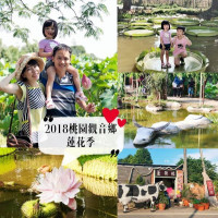 桃園市休閒旅遊 景點 觀光花園 桃園觀音香蓮花季懶人包 照片