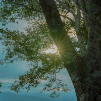 魔王的碗公在縱谷原遊會 哈拉梯田餐桌 pic_id=5633460