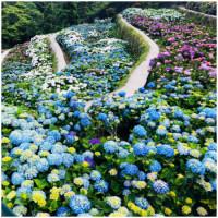 初夏限定繡球花季強勢登場!IG熱搜打卡點「大梯田花卉生態農場」繡球花大爆發,超浪漫花廊讓你拍到不想走。