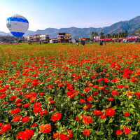 高雄市休閒旅遊 景點 觀光花園 2015美濃花海 照片