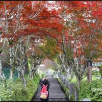 宜蘭縣休閒旅遊 景點 森林遊樂區 太平山中央階梯 照片