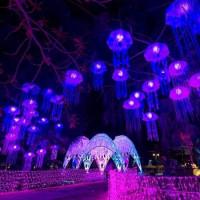 網友激推台灣史上最美燈會!超過100個裝置藝術「2019台灣燈會」13天快閃中,就是要全台網美、網帥衝去屏東拍IG照。