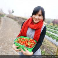 苗栗縣休閒旅遊 景點 觀光果園 石水坊高冷草莓 照片