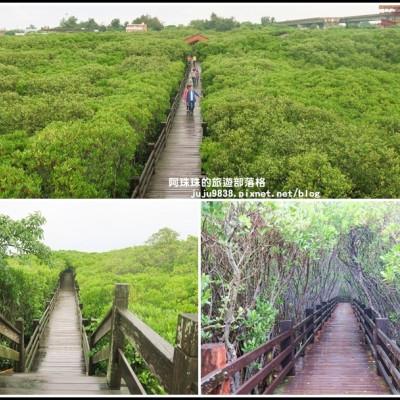 新豐紅樹林生態保護區。漫步龍貓綠色隧道