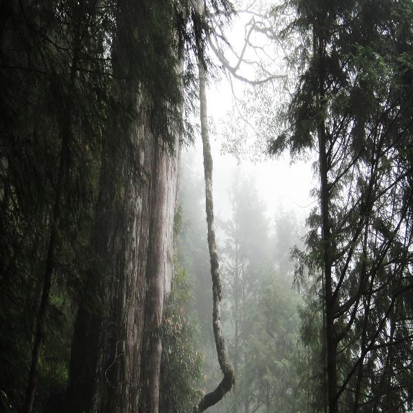 宜蘭縣 休閒旅遊 景點 森林遊樂區 棲蘭國家森林遊樂區