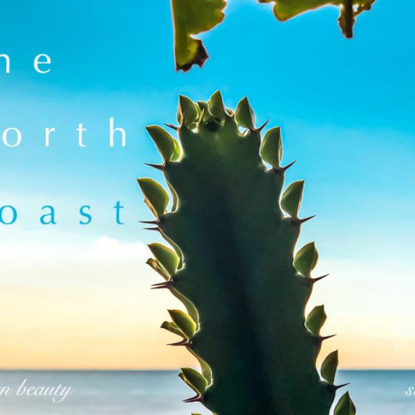 新北市 餐飲 多國料理 多國料理 小尼斯灣-淺水灣海景餐廳